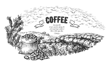 coffee plantation landscape bag and bush in graphic style hand-drawn vector illustration.