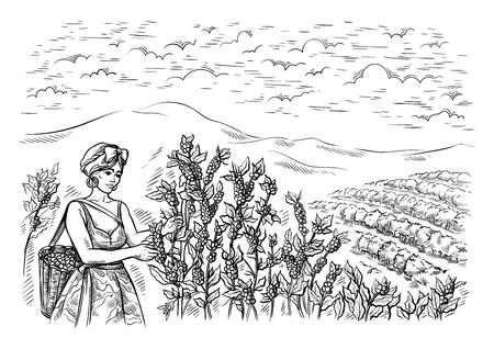 la donna raccoglitrice raccoglie il caffè al paesaggio della piantagione di caffè nell'illustrazione disegnata a mano di vettore di stile grafico.