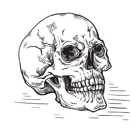 hand drawn sketch anatomic skull vintage vector illustration Stock Illustratie