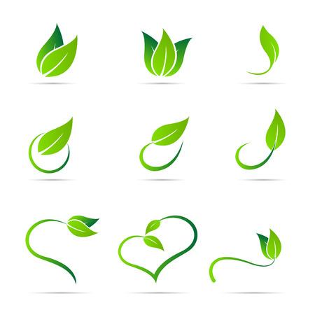 saludable logo: Diseño vectorial Ecología hojas aisladas sobre fondo blanco. Vectores