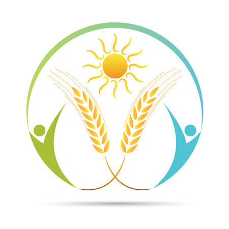 Wheat logo vector design isolated on white background. Illustration