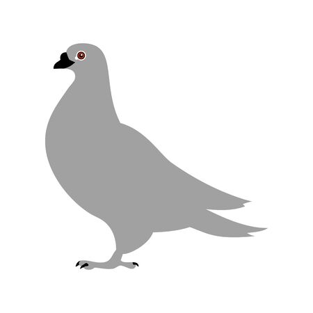 Pigeon icon, vector line illustration