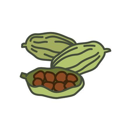 Cardamom icon, vector line illustration