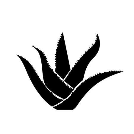 Aloe vera plant, Vector illustration. 向量圖像