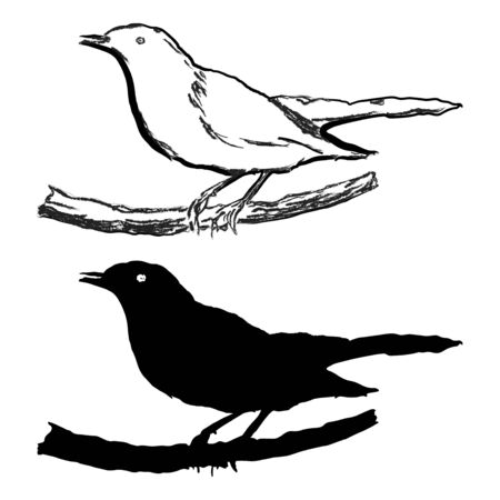 Blackbird, two black and white variants, silhouette and contour line.