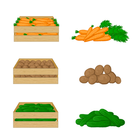 wood crate: Vegetables in wooden boxes isolated on white background. Carrots, potatoes and cucumbers. Organic food illustration. Fresh vegetables from the farm.