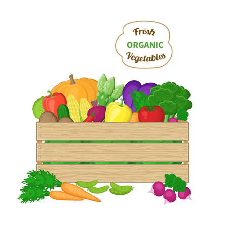 autumn vegetables: Harvest in a wooden box. Crate with autumn vegetables. Fresh Organic food from the farm. Vector colorful illustration of the autumn harvest isolated on white background. Illustration