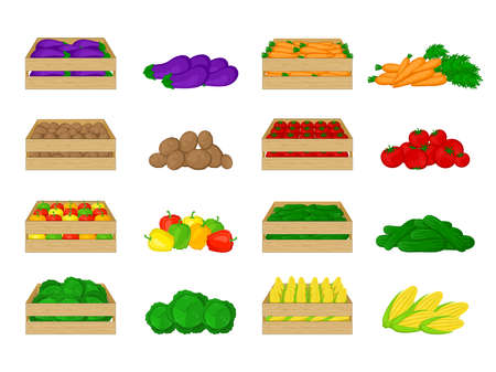 Set of vegetables in wooden boxes isolated on white background. Eggplant, potatoes, peppers, cabbage, carrots, tomatoes, cucumbers, corn. Organic food illustration. Fresh vegetables from the farm. Illustration