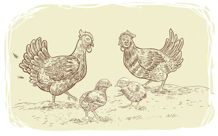 Vector illustration of hens and chicks. a series of farm animals hand drawn, handmade drawing figure chicken, Isolated fowls image on a white background. 免版税图像 - 151269517