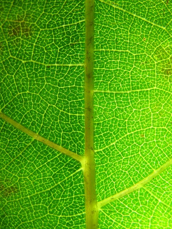 Extreme texture macro shot of green spring tree leaf Stock Photo