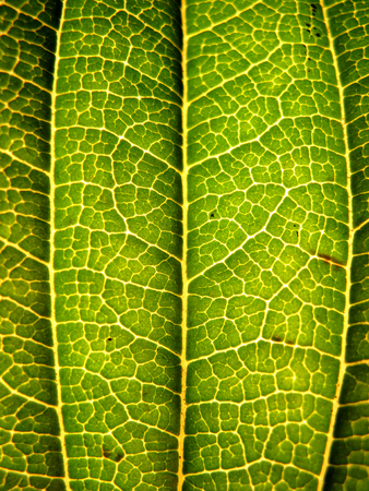 Extreme macro shot or texture green autumn tree leaf