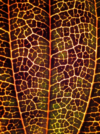 Extreme texture macro shot of purple autumn tree leaf Stock Photo