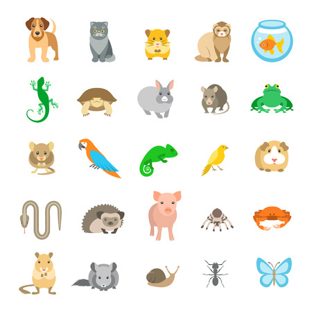 Animals pets vector flat colorful icons set. Cartoon illustrations of various domestic animals. Mammals, rodents, amphibian, insects, birds, reptiles, which people take care of at home