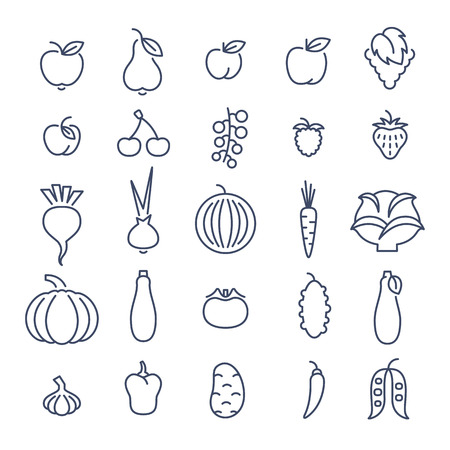cherry tomato: Farm fruits and vegetables flat thin line vector icons set. Organic healthy food linear symbols. Harvest infographic elements. Agriculture design elements. Apple, tomato, pepper, cherry, berries etc.