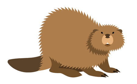 Cute beaver with long tail vector cartoon illustration. Wild zoo animal icon. Big brown furry adult looking straight. Isolated on white. Forest fauna childish character. Simple flat design element Illustration