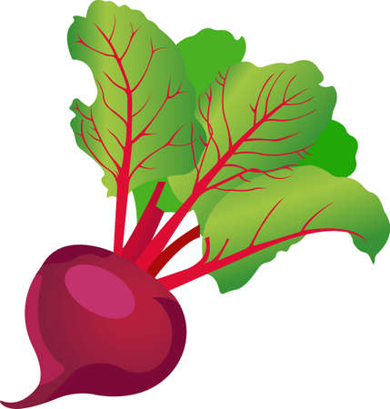 Purple beets with green leaves. Vector illustration isolated on white background. Vecteurs