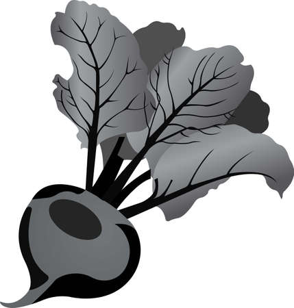 Purple beets with green leaves. Grayscale image of food. Vector illustration isolated on white background.
