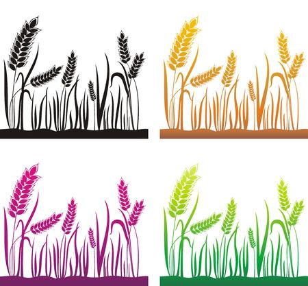 cultivate: Grain ears.