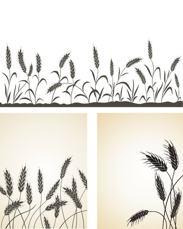wheat illustration: Grain ears.