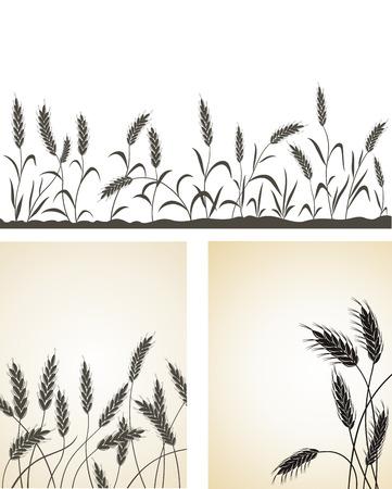 centeno: Orejas de grano.  Vectores