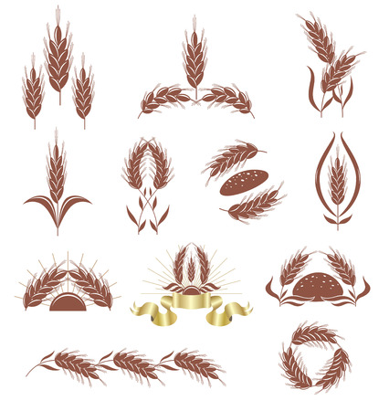Grain ears.  Vector