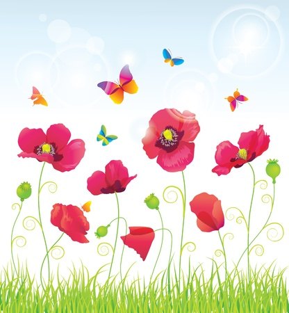 The Red Poppies and Butterflies  Vector