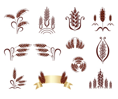 barley field: Grain ears. Design elements.  Illustration