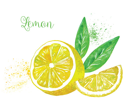 segment: Watercolor Vector Lemon with a leaf, isolated on white background. Each segment is Sliced Isolated.