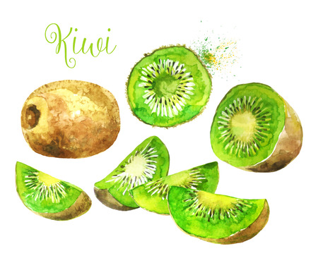 Whole kiwi fruit and his segments Sliced Isolated on White Background. Watercolor Vector Illustration. Each segment is Sliced Isolated.