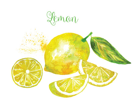 segment: Whole Lemon and his segment Sliced Isolated on White Background. Watercolor Vector Illustration. Each segment is Sliced Isolated.