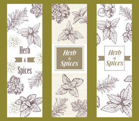 brown: Herbs and spices label. Engraving illustrations for packaging. Vector sketches of vegan food. Hand drawn plants.