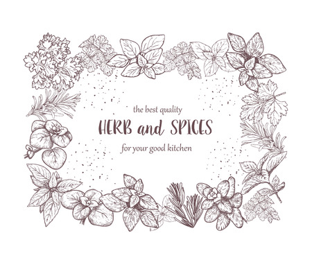 basil: Herbs and spices label. Engraving illustrations for packaging. Vector sketches of vegan food. Hand drawn plants. Frame. Illustration