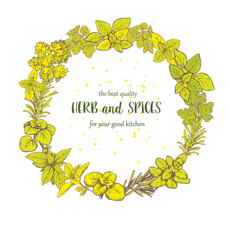 Herbs and spices label. Engraving illustrations for packaging. Vector sketches of vegan food. Hand drawn plants. Frame. Illustration