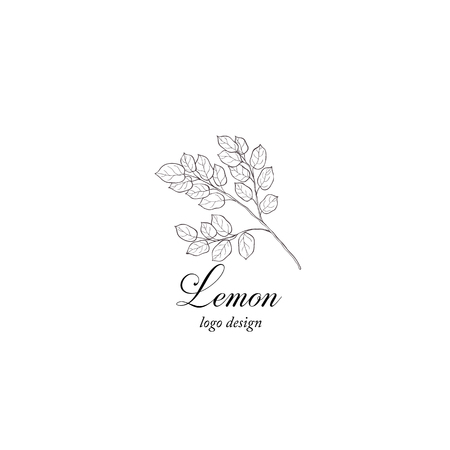 Lemon plant branch. Greenery design element. Çizim
