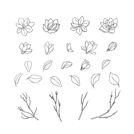 Magnolia flower. Floral hand drawn design elements. Line art isolated on the white background. Illustration