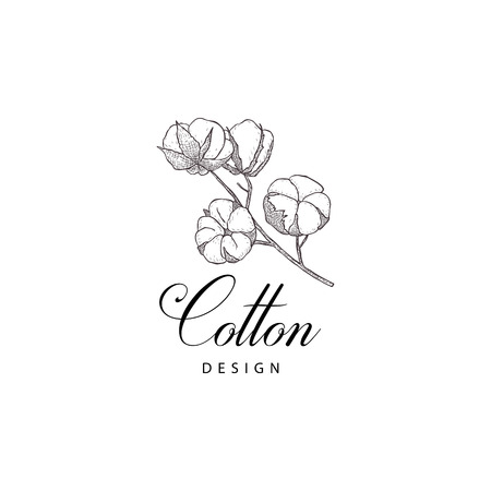 Cotton flower. Floral hand drawn design elements. Line art isolated on the white background.