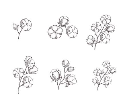 Cotton flower. Floral hand drawn design elements. Line art isolated on the white background. Vektoros illusztráció