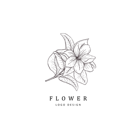 Magnolia flower. Floral hand drawn design element. Line art isolated on the white background.