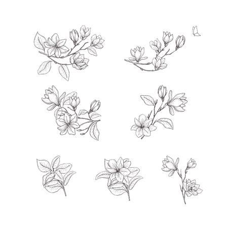 Fleur de magnolia. Éléments de design floral dessinés à la main. Dessin au trait isolé sur fond blanc.
