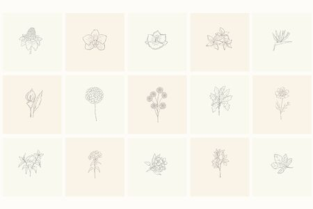 Ensemble d'éléments de design floral : plantes, branches, feuilles. Éléments dessinés à la main pour le logo, l'emblème, la décoration. Logo