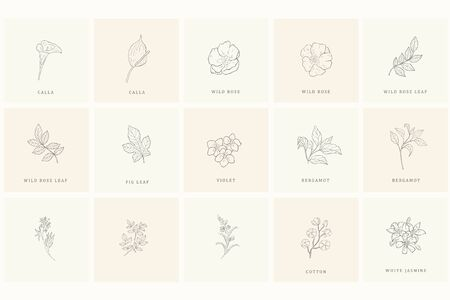 Set of floral design elements: plants, branches, leaves. Line hand drawn elements for logo, emblem, decoration.