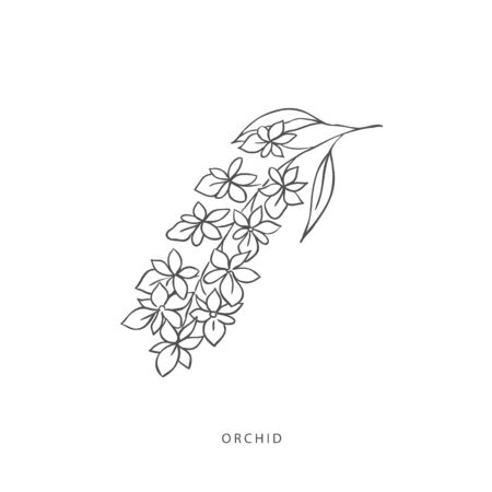 Hand drawn plant branches. Greenery design elements. Botanical logo of orchid.