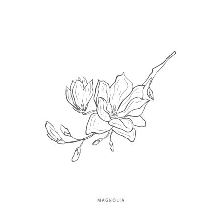 Hand drawn plant branches. Greenery design elements. Botanical logo of magnolia.