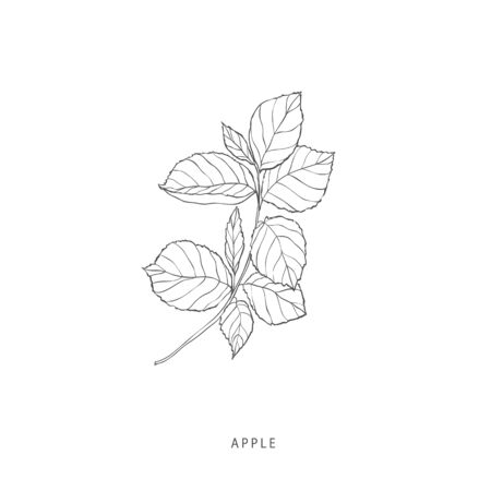 Hand drawn plant branches. Greenery design elements. Botanical logo of apple.
