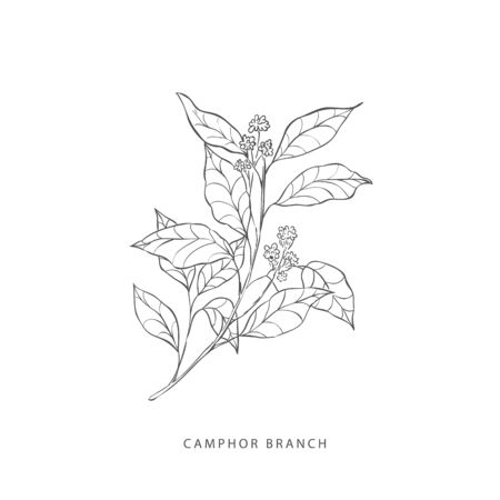 Hand drawn plant branches. Greenery design elements. Botanical logos. Illustration