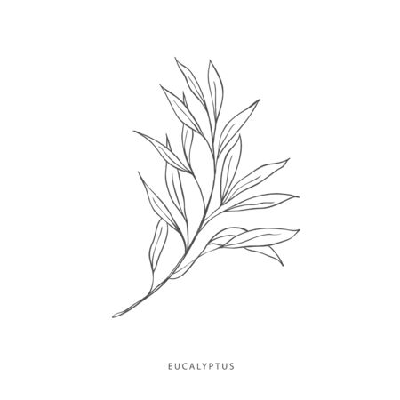 Hand drawn plant branches. Greenery design elements. Botanical logo of eucalyptus.