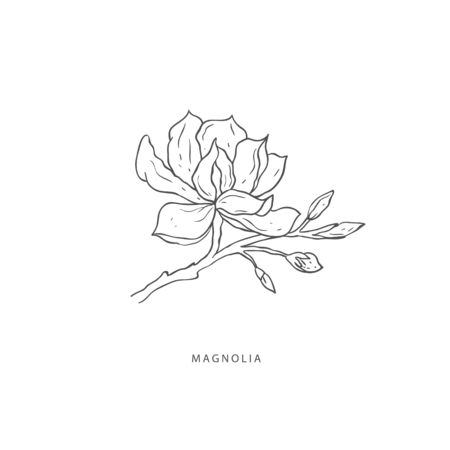 Hand drawn plant branches. Greenery design elements. Botanical logo of magnolia. Çizim