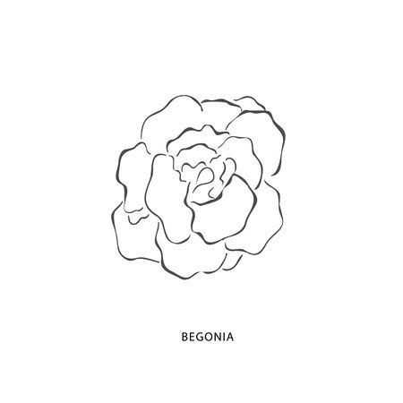 Hand drawn begonia flower. Plant design elements. Botanical logo.