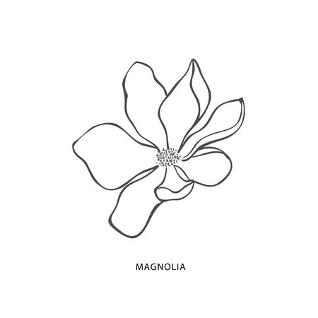 Hand drawn magnolia flower. Botanical design element and logo.