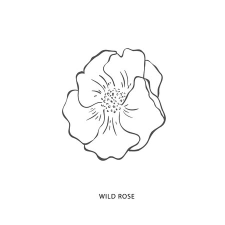 Hand drawn wild rose flower. Plant design element. Botanical logo.